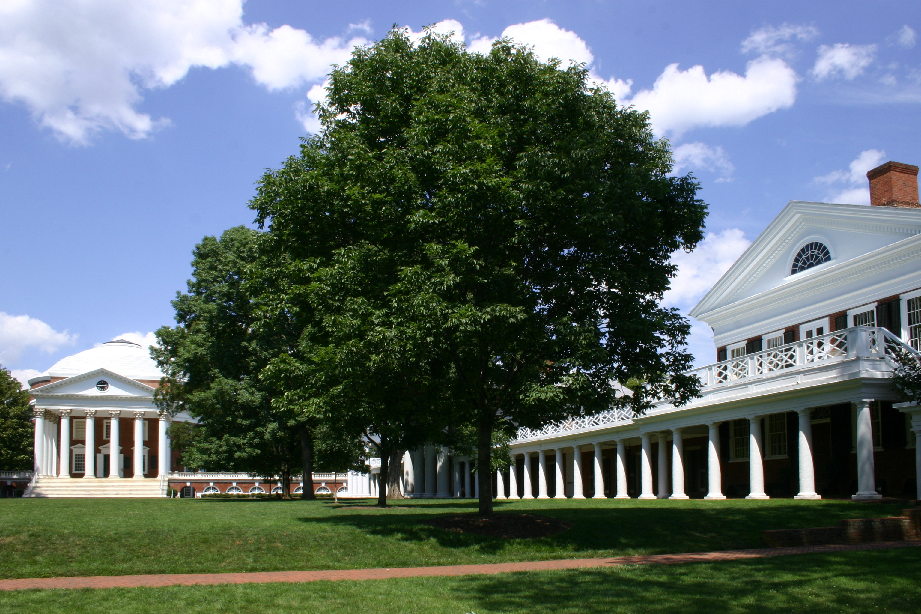 Tree in Courtyard of UVA